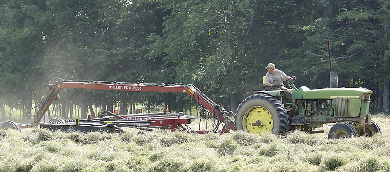 Tom raking hay for the dry cattle.